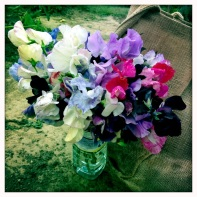 The last bunch of sweet peas, 2013
