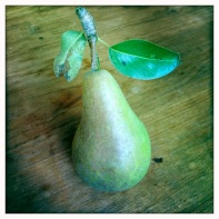 Pear from the communal tree.