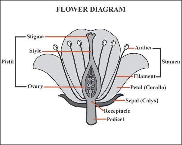flower_diagram