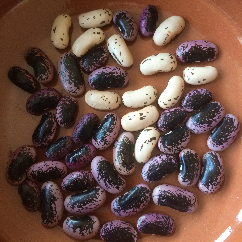 recipe: runner beans seeds [23]